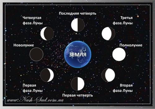 Лунный день сегодня - Мир космоса
